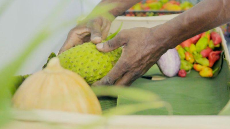 Ta Nou, une entreprise martiniquaise qui permet de manger bio et sans chlordécone