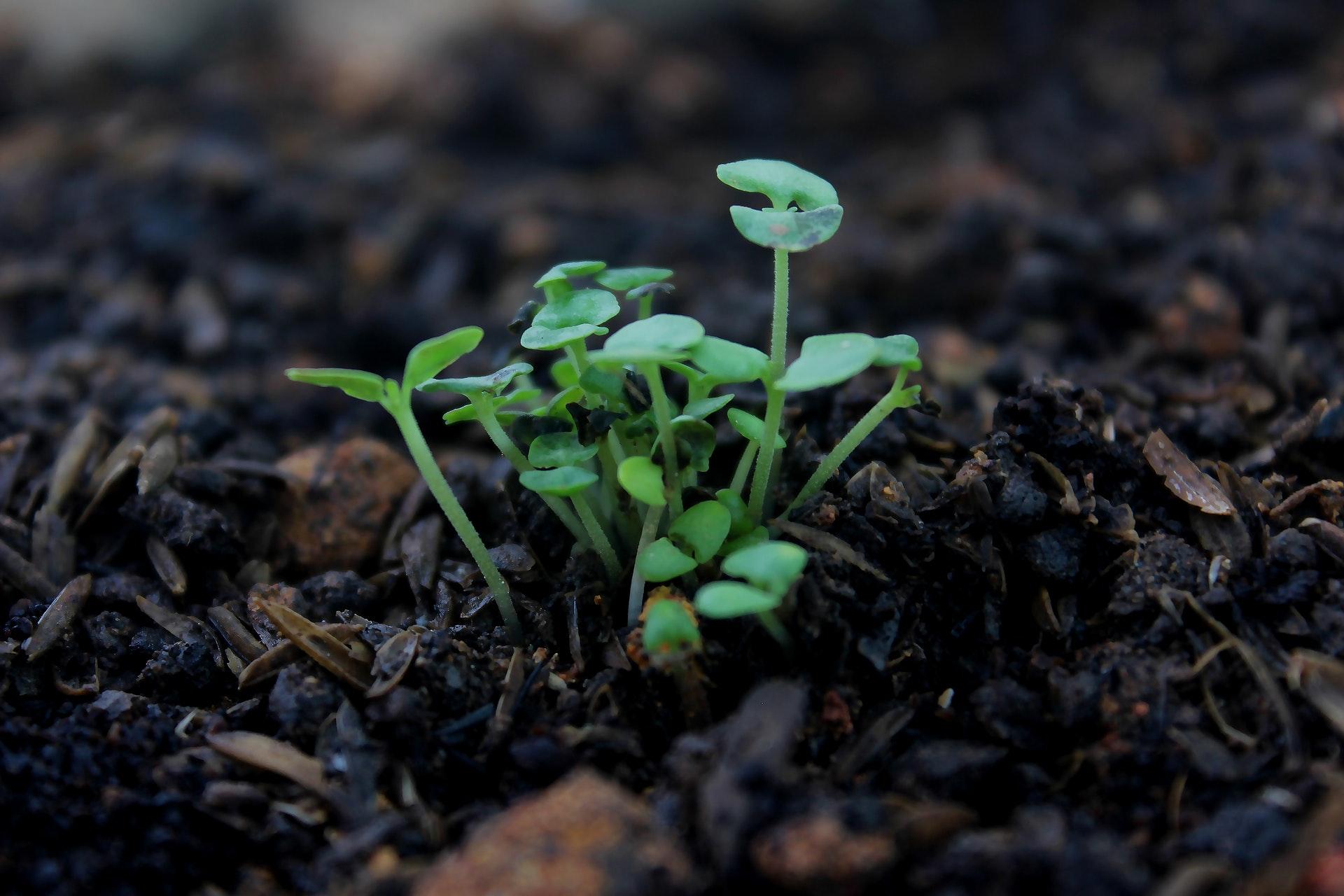 Antilles : le CNRS annonce la résurrection du chlordécone  avec l'usage du glyphosate